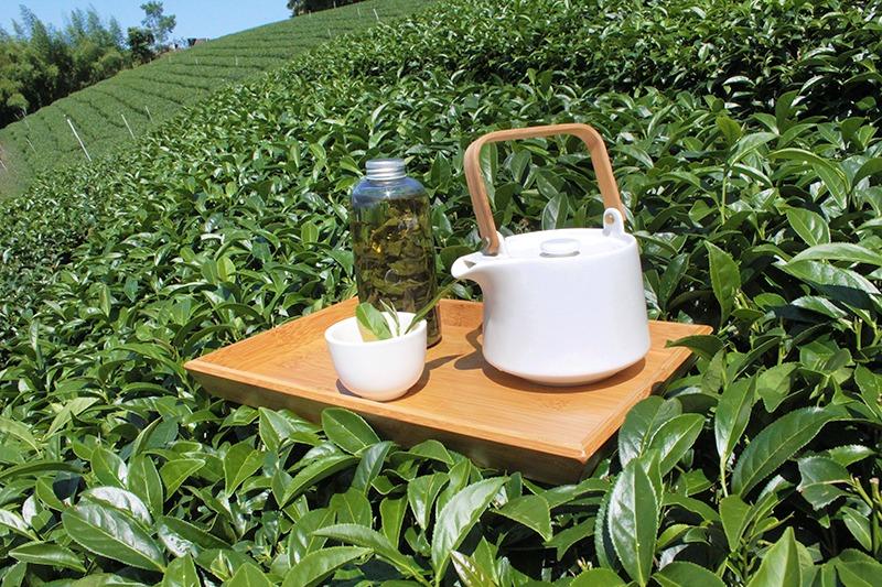 阿里山春茶採茶時節