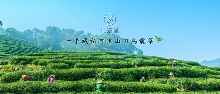 2020阿里山高山茶春茶