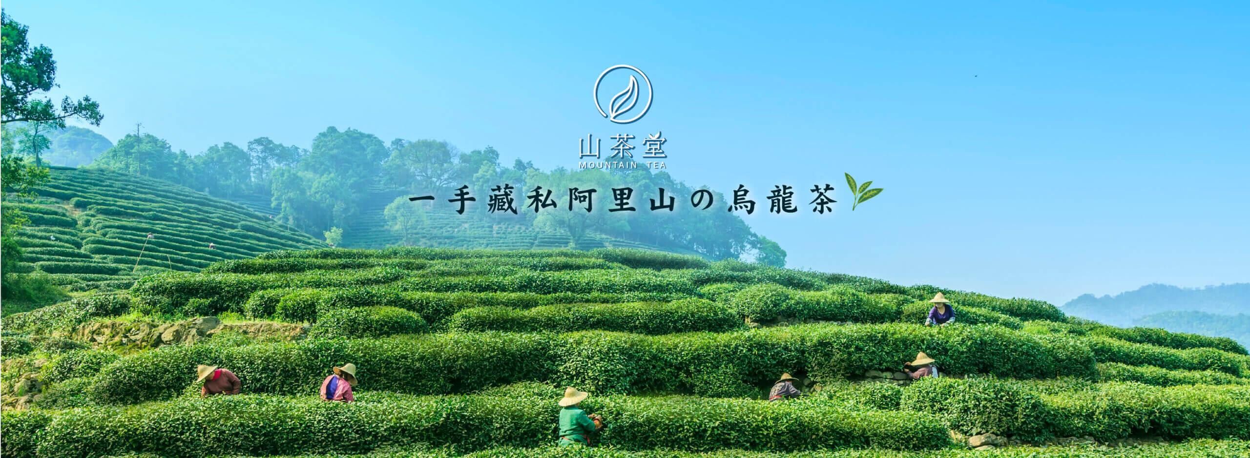 阿里山高山茶價格